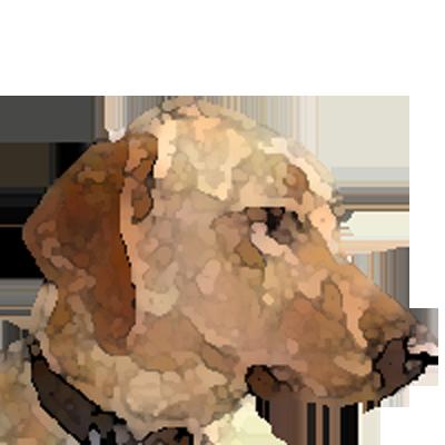 cogdog avatar